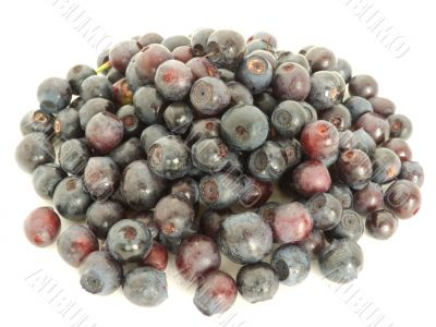 Forestry blueberries