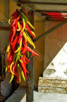 Shiny chili pepper