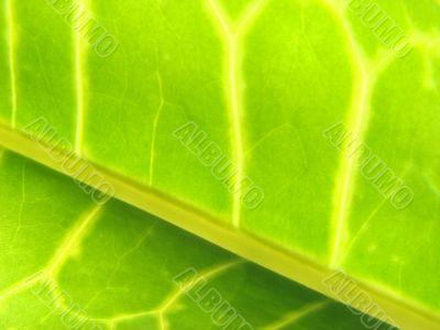 green leaf macro vains bright yellow