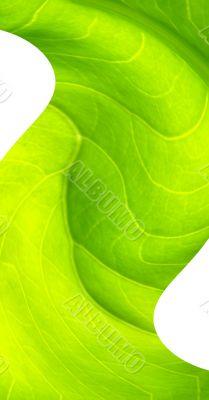 leaf macro lines twirl