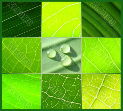 collage green leafs water drops green background