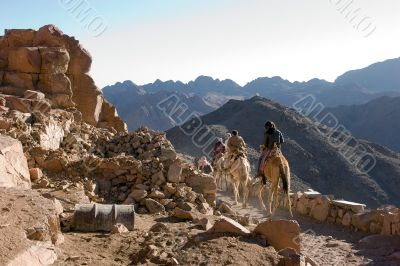 Riding camels on Sinai