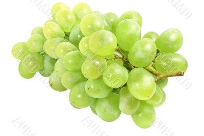 wite grapes
