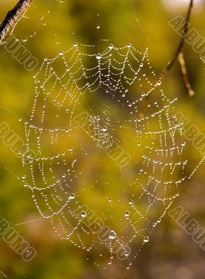 Web after a rain