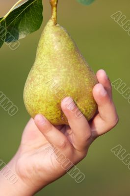 hand of child catching a pear