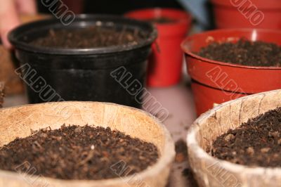 Seedling preparation
