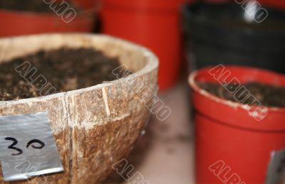 Seedling preparation