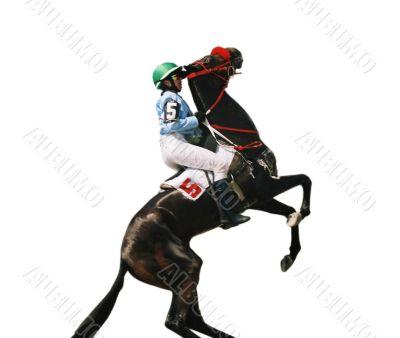 Thoroughbred horse.