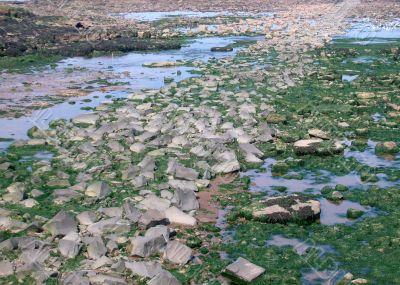 Rocks at low tide
