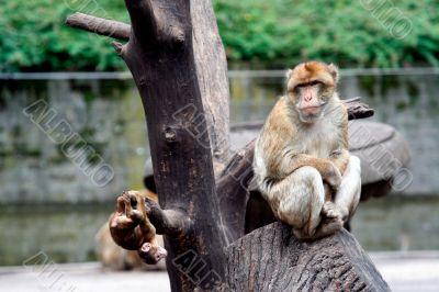 Monkey sat in tree
