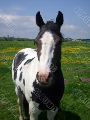 Horse stood in countryside