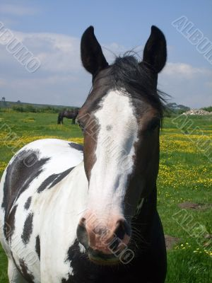 Portrait of Horse in countryside