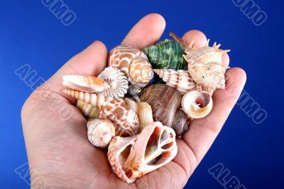 sea-shells in hand