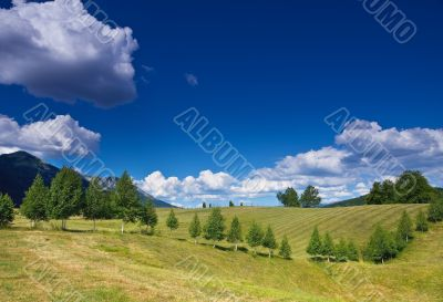 rural landscape with a row of birches