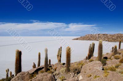 saltplanes of Uyuni