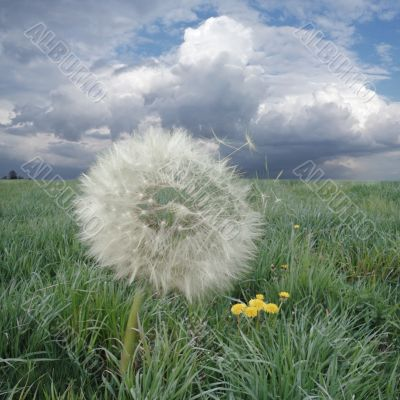 Wind whiff