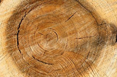 Pile wood