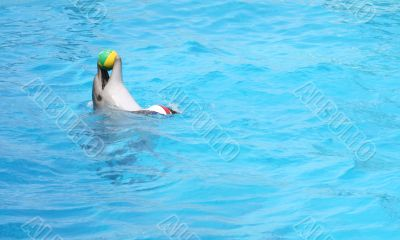 Performing dolphin with ball