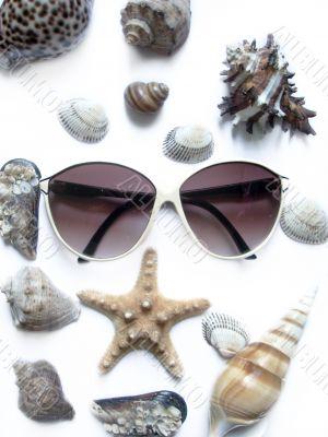 solar glasses and seashells