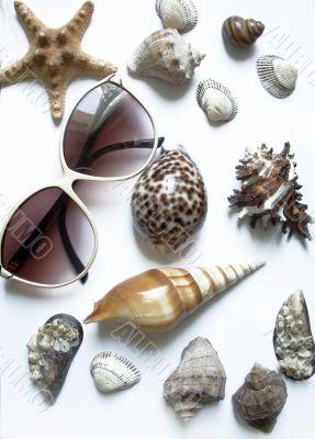 solar glasses and different seashells