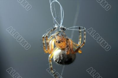 a spider for work