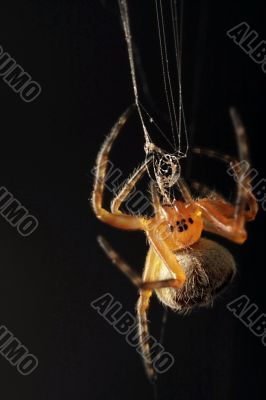 a spider on a black background