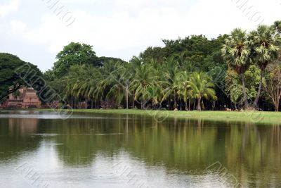 Pond and palm trees