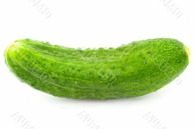 One green cucumber