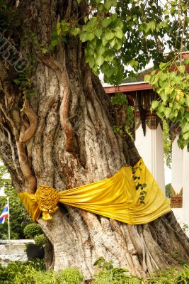 Bodhi tree and temple