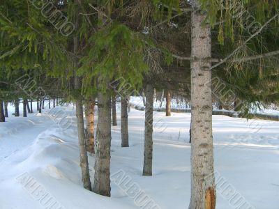 Fiber in snow park.