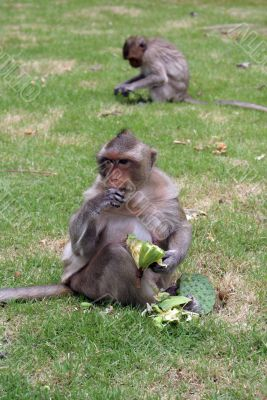 Monkey and grass