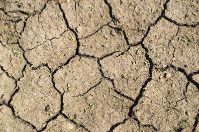 Dry ground.