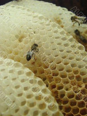 macro bee honey comb