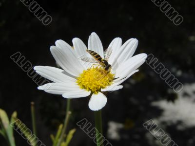 insect on yellow white flower