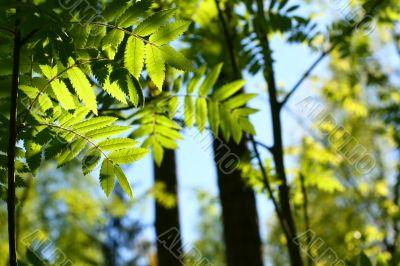 incredible green leaf foliage