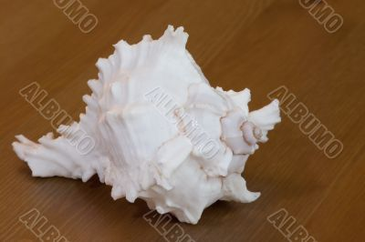 Clam-shell on the wooden background