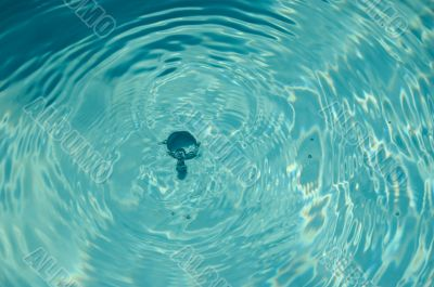 Two drops has fallen into water