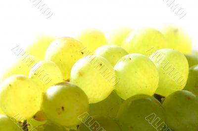isolated grape