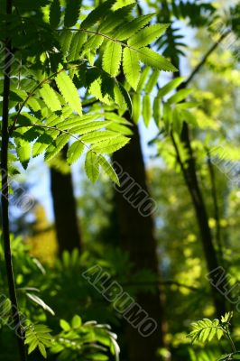 incredible green leaf foliage
