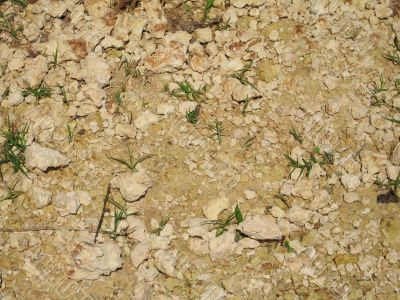 dry ground with small green plant background