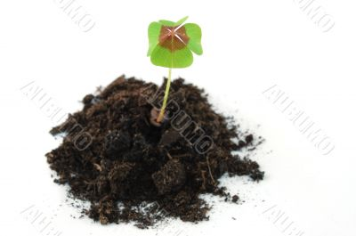 Plant on earth