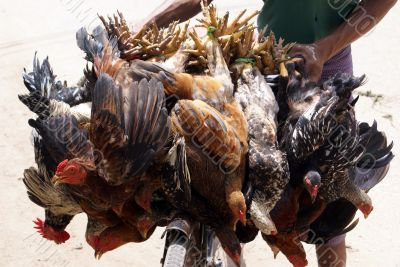 Birds on the market