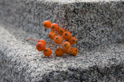 rowanberry on granite