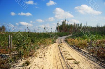 aging road in copse
