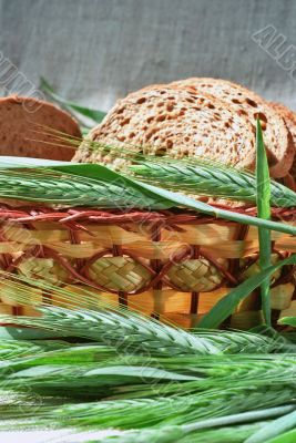 Spicas of rye and bread slices