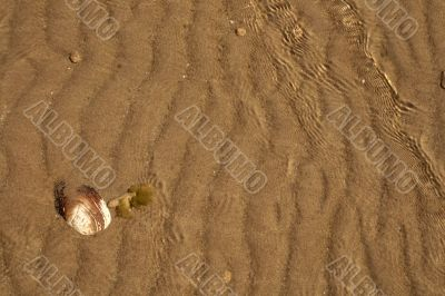 The shell on sand background