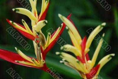 Tropical Flowers B