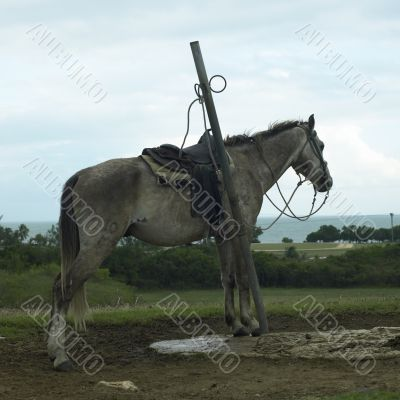 skinny horse attached to a pole