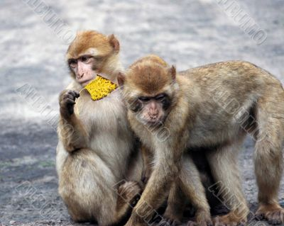 Two monkeys having fun