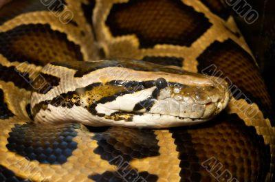 Mesh python